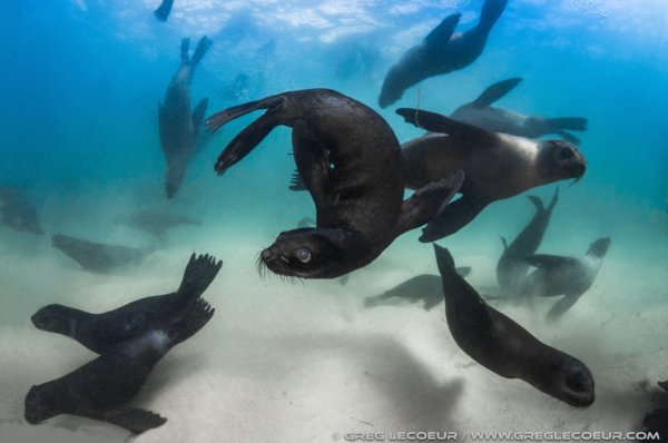 Swim with seals in Plettenberg Bay