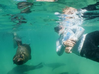 Snorkel guide and Cape fur seal in Plettenberg Bay